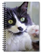 Cat Reaches For Camera Spiral Notebook