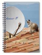 Cat Sat Spiral Notebook