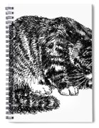 Cat-tabby-posters-1 Spiral Notebook