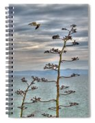 Catalina Gull And Channel Spiral Notebook