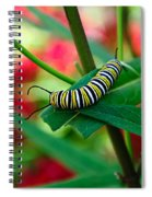 Caterpillar Before The Butterfly 1 Spiral Notebook