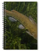 Catfish Protecting Her Young Spiral Notebook