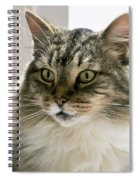 Cats Are Magical Spiral Notebook