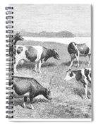 Cattle, 1888 Spiral Notebook