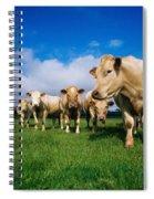 Cattle, Charolais Spiral Notebook