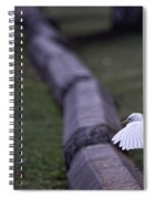 Cattle Egret Landing Spiral Notebook