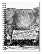 Cattle Spiral Notebook