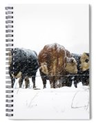 Cattle In A Snowstorm In Southwest Michigan Spiral Notebook