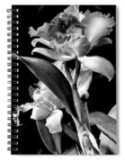 Cattleya - Bw Spiral Notebook