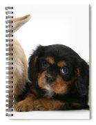 Cavalier King Charles Spaniel Pup Spiral Notebook
