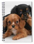 Cavalier King Charles Spaniel Puppies Spiral Notebook