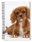 Cavalier King Charles Spaniel Puppy Spiral Notebook