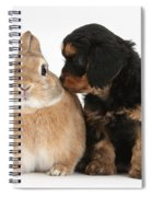 Cavapoo Pup And Sandy Netherland-cross Spiral Notebook