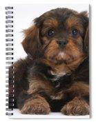 Cavapoo Pup Spiral Notebook
