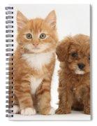 Cavapoo Puppy And Kitten Spiral Notebook