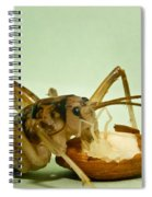 Cave Cricket Feeding On Almond 8 Spiral Notebook