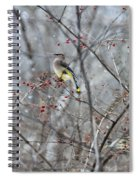 Cedar Wax Wing 3 Spiral Notebook