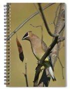 Cedar Waxwing - 2491 Spiral Notebook