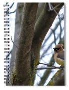 Cedar Waxwings Spiral Notebook