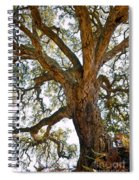 Centenarian Cork Tree Spiral Notebook