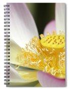 Center Of A Lotus Spiral Notebook