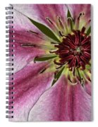 Center Of It All Spiral Notebook