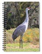 Central Florida Sandhill Crane With Oaks Spiral Notebook