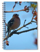 Chaffinch Spiral Notebook