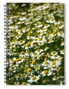Chamomile Fields Spiral Notebook