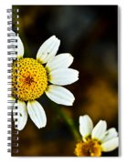 Chamomile Flower In Decay Spiral Notebook