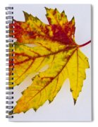 Changing Autumn Leaf In The Snow Spiral Notebook