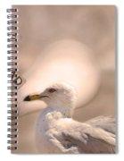 Chapter Nineteen  Spiral Notebook