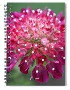 Charlottenburg Palace Beauty Spiral Notebook