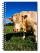 Charolais Bull, Ireland Spiral Notebook