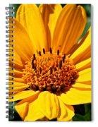 Cheddar Spiral Notebook