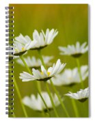 Cheerful Daisy Wildflowers Blowing In The Wind Spiral Notebook