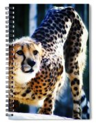 Cheeta Spiral Notebook