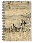 Cheetah Mother And Cubs Spiral Notebook