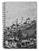 Cheetah Tip Toes For A Drink Spiral Notebook