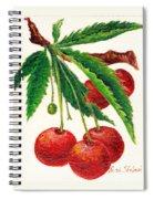 Cherries On A Branch Spiral Notebook