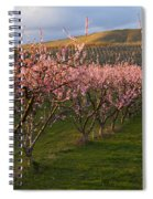 Cherry Blossom Pink Spiral Notebook