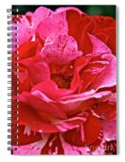Cherry Chip Rose Petals Spiral Notebook