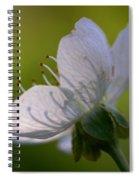 Cherry Flower Spiral Notebook