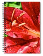 Cherry Red Lily Spiral Notebook