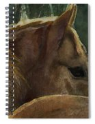 Chestnut Dreams Spiral Notebook
