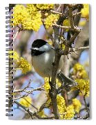 Chickadee Among The Blossoms Spiral Notebook