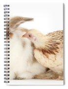 Chicken And Rabbit Spiral Notebook
