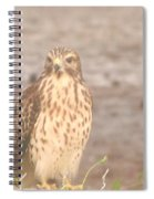 Chicken Hawk 1 Spiral Notebook