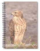 Chicken Hawk 2 Spiral Notebook