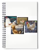 Chickens Spiral Notebook
